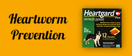 heartworm-prevention